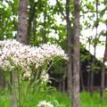 Photos: 花の写真