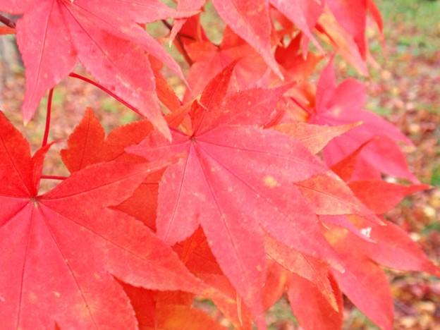 色付いた葉っぱ