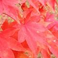 写真: 色付いた葉っぱ