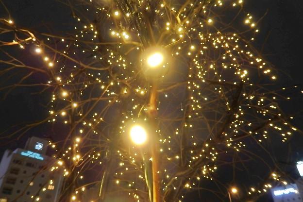 写真: 光の粒
