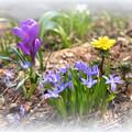 写真: 春は短くて...