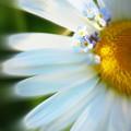 花に花飾り
