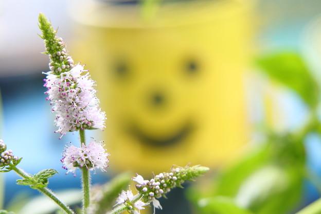 スペアミントの花