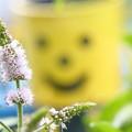 写真: スペアミントの花