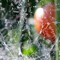 写真: トマト畑