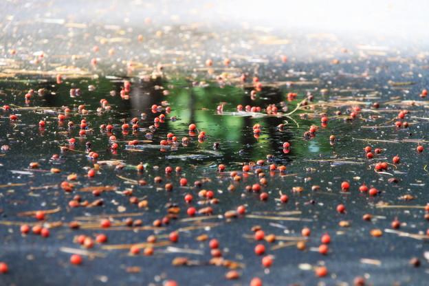 緑を写した秋の小道
