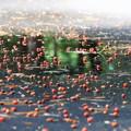 写真: 緑を写した秋の小道