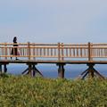 写真: 橋を駆ける人