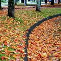 写真: 降り積もる落ち葉