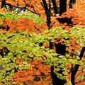 写真: みかん色とうぐいす色