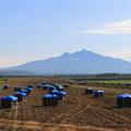 写真: 斜里岳と玉葱