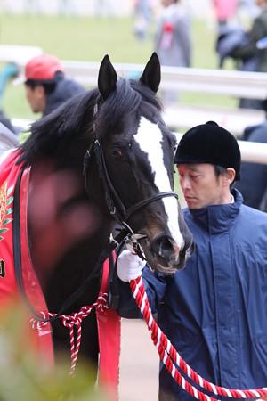 ブラックスピネル_2(17/02/05・第67回 東京新聞杯)