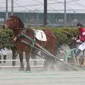 ゴールデンニセイ(17/04/09・2R・平成29年度第1回能力検査)