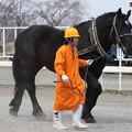 コトイワキ(17/04/09・10R・平成29年度第1回能力検査)