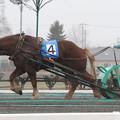 写真: スピードガール レース(11/04/23・1R)