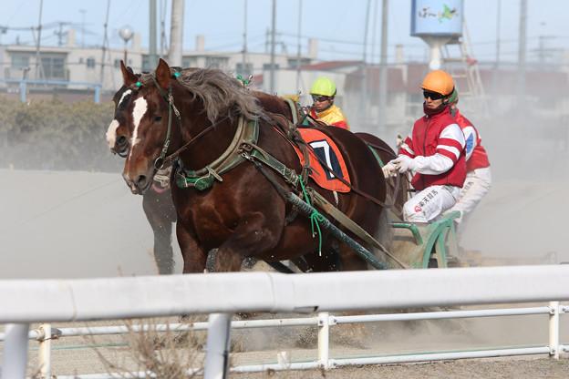 ミントヒッパルゾー レース(17/03/18・4R)