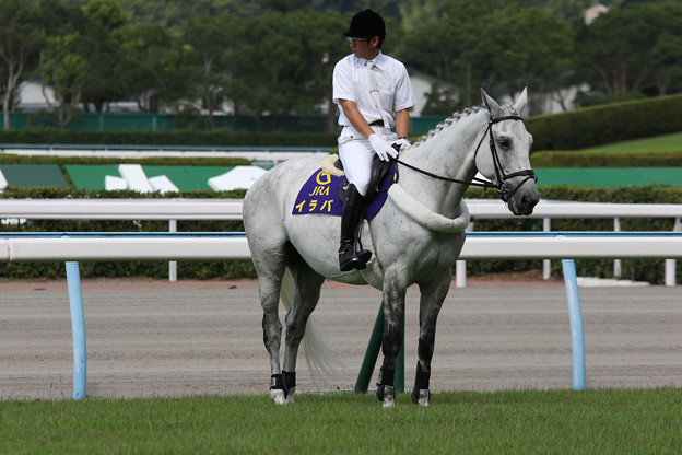 小倉競馬場 誘導馬・イラバ_5(16/07/30)