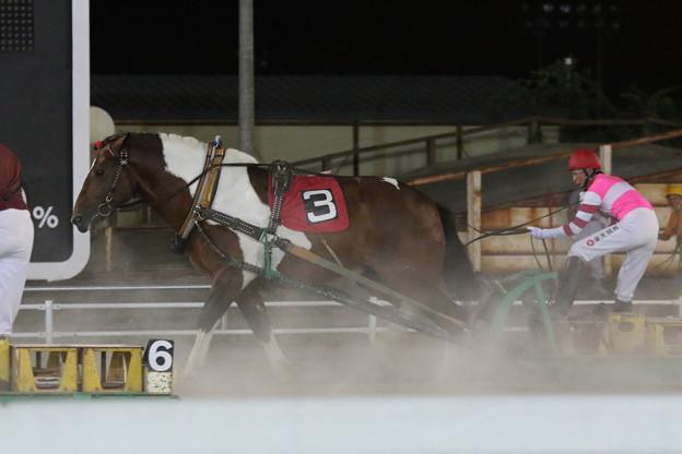 ブチオ レース(17/07/30・11R)
