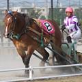 写真: ヤマトジャパン レース_1(17/07/30・4R)