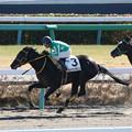 タイキダイヤモンド レース(17/01/15・2R)