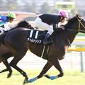 タイムトリップ レース(17/01/28・クロッカスステークス)