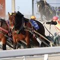 写真: ジェイワン レース(17/03/20・北海道新聞社杯若草特別)