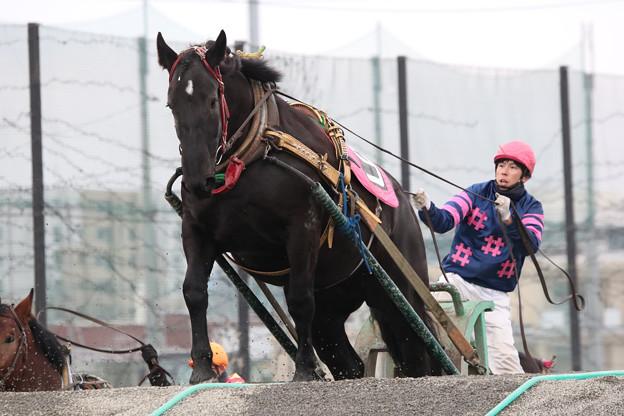ゴールデンエイジ  レース_1(17/11/26・2R)
