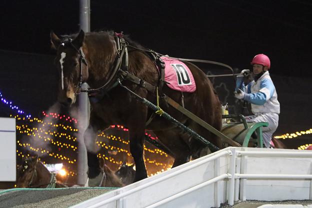 ミサキセンショー レース(17/11/25・8R)