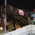 写真: ミサキセンショー レース(17/11/25・8R)