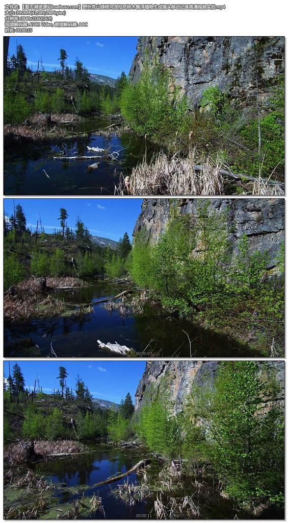 野外荒山绿树河流枯死树木飘浮植物生成镜头移动记录高清视频实拍