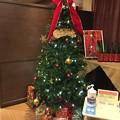 Photos: クリスマスツリー ホテルウェルシーズン浜名湖