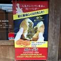 Photos: カレーパン 石窯パン工房 ル・マタン