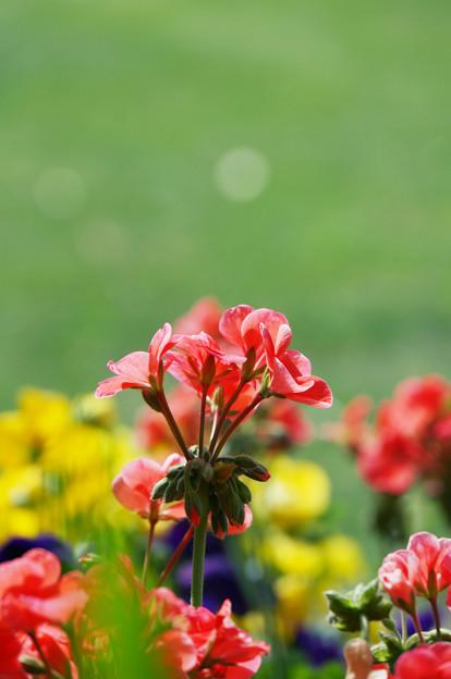写真: 鮮やかに彩る