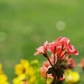 写真: 彩の花