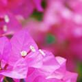 写真: 花盛りの夏花