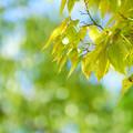 Photos: 青空と緑