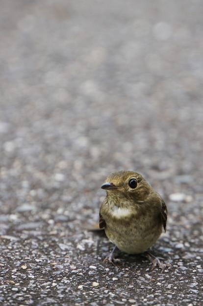 通り道に落ちてた鳥さん