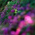 写真: 萩の寺