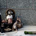 Photos: これはなんのハーレムなのか?