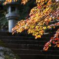 Photos: 石段の紅葉