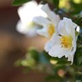 寒気に咲く花