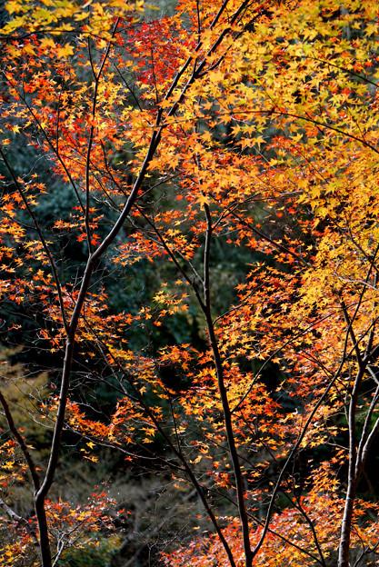 染まる木々