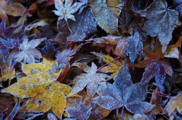 凍った季節
