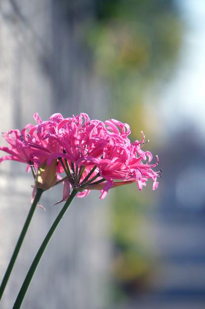 街路の花束