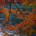 川面を彩る