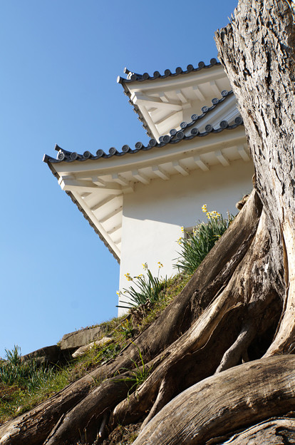 崖の上の楼閣