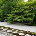 幾何学的石畳に緑苔を添えた庭