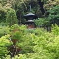 写真: 永観堂多宝塔