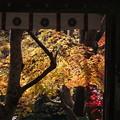 写真: 寂光院門