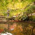 写真: 京都の池